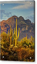 The Desert Golden Hour II  Acrylic Print
