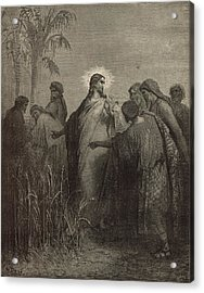 The Disciples Plucking Corn On The Sabbath Acrylic Print by Antique Engravings
