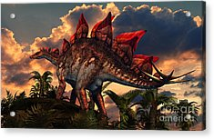 The Distinctive Shape Of Stegosaurus Acrylic Print by Philip Brownlow