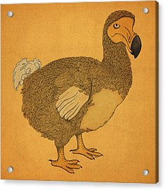 The Dodo Acrylic Print by Meg Shearer