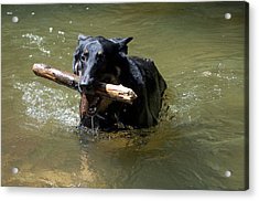 The Dog Days Of Summer Acrylic Print by Bill Cannon
