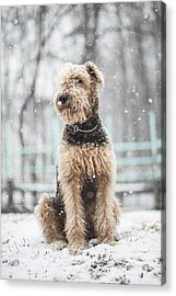 The Dog Under The Snowfall Acrylic Print