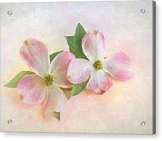 The Dogwood Blossom Acrylic Print