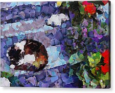 The Dreaming Kitten Acrylic Print by Yury Malkov