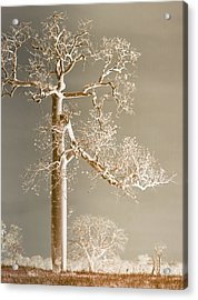 The Dreaming Tree Acrylic Print