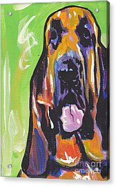 The Droopy Bloodhound Acrylic Print