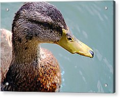 The Duck Acrylic Print by Milena Ilieva