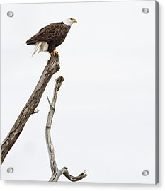 The Eagle Has Landed Acrylic Print
