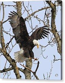 The Eagle Is Landing Acrylic Print