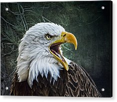 Acrylic Print featuring the photograph The Eagle's Cry by Brian Tarr