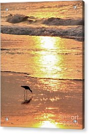 The Early Bird Acrylic Print