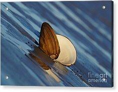 The Easy Catch Acrylic Print by Zori Minkova