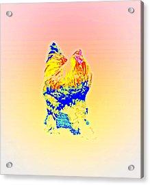 The Egg Warmer Is Flying Again  Acrylic Print