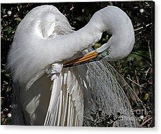 The Elegant Egret Acrylic Print