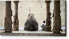 The Elephant & Its Mahot Acrylic Print by Ruhan