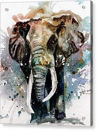 The Elephant Acrylic Print