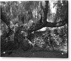 The Elephant Tree Acrylic Print