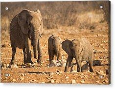 The Elephants Itching Rock Acrylic Print by Paul W Sharpe Aka Wizard of Wonders