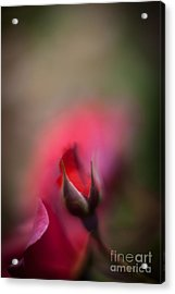 The Emerging Acrylic Print by Mike Reid