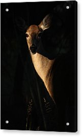 The Empress  Acrylic Print by Rita Kay Adams