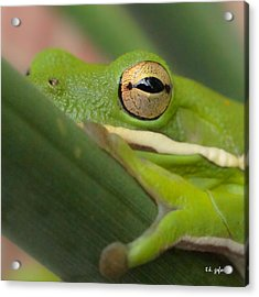 Acrylic Print featuring the photograph The Eye Has It Squared by TK Goforth