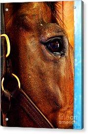 The Eye Of A Champion Da Hoss Acrylic Print