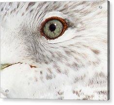 The Eye Of The Gull Acrylic Print