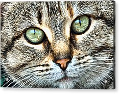 The Eyes Have It Acrylic Print by Kenny Francis