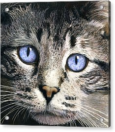 The Eyes Have It Acrylic Print by Ted Head