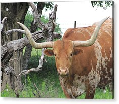 The Eyes Of Texas Acrylic Print by Shawn Hughes