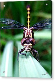 Acrylic Print featuring the photograph The Face Of A Dragonfly 01 by George Bostian