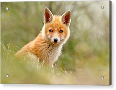 The Face Of Innocence _ Red Fox Kit Acrylic Print by Roeselien Raimond