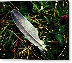The Fallen Feather Acrylic Print