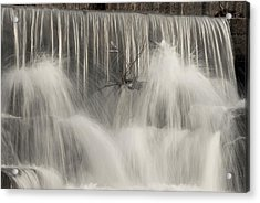 The Falls Acrylic Print by Cindy Rubin