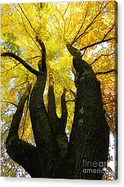 The Family Tree Acrylic Print