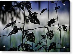The Fence Line Acrylic Print