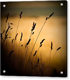 The Field Acrylic Print by Dave Bowman