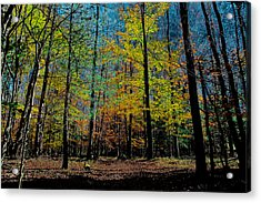 The Final Days Of Fall Acrylic Print by David Patterson