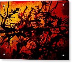 The Final Frenzy Acrylic Print by Malinda Kopec
