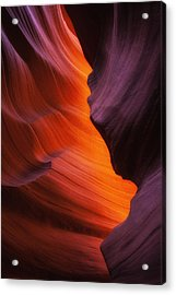 The Fire Within Acrylic Print by Darren  White