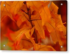 The Fire Within Acrylic Print by Michael Glenn
