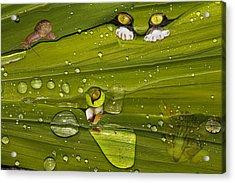 The First Rain Acrylic Print by Angela A Stanton