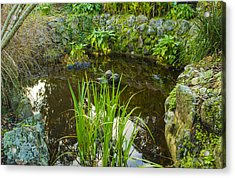 Acrylic Print featuring the photograph The Fish Pond  by Naomi Burgess