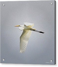 The Flight Of The Great Egret With The Stained Glass Look Acrylic Print