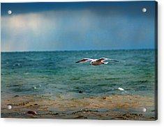 The Flight Acrylic Print by Rhonda Humphreys
