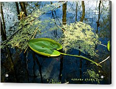 Acrylic Print featuring the photograph The Floating Leaf Of A Water Lily by Verana Stark