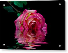 The Floating Rose Acrylic Print by Doug Long