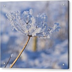 The Flower Crystal Acrylic Print by Dave Woodbridge