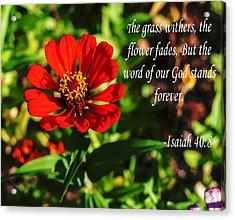 The Flower Fades Acrylic Print