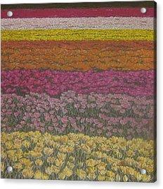 The Flower Field Acrylic Print by Harvey Rogosin